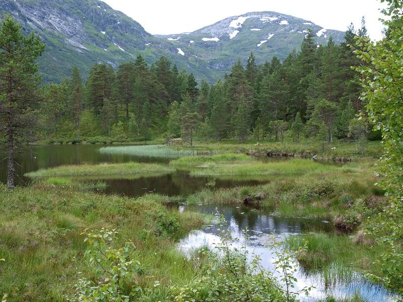 Viksdalen 18-07-11 (18).jpg