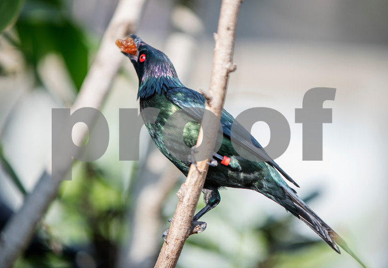 birds 20.jpg