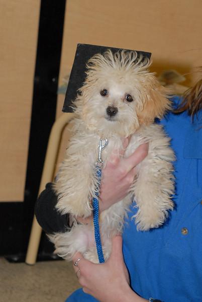 puppy (3 of 4).jpg