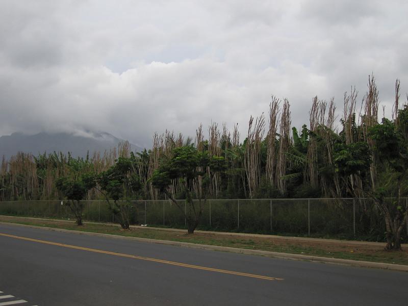 20070108_000065.JPG