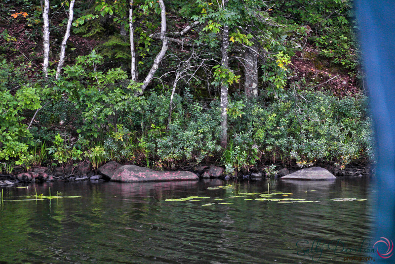 rainy day on Colby LakeIMG_2305.JPG