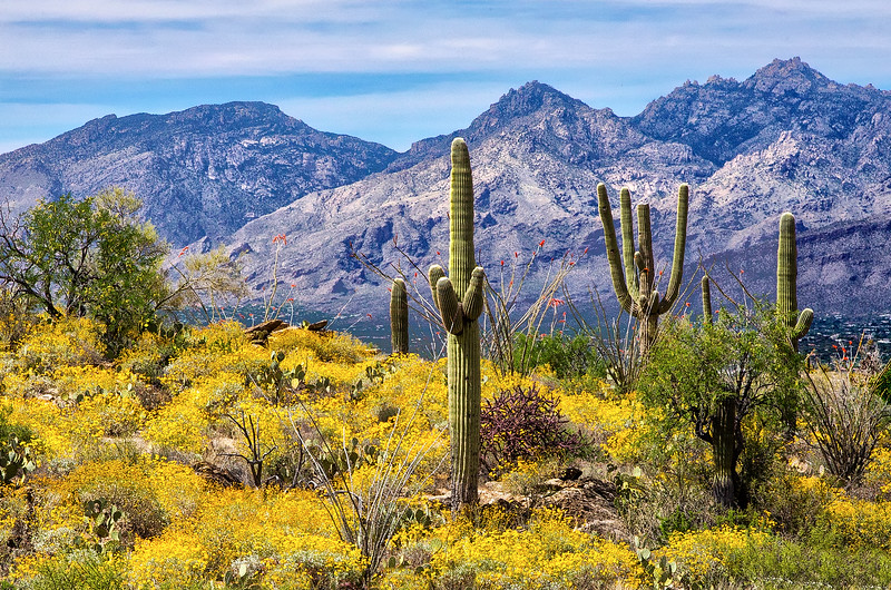 Saguaro_518_Saguaro__MG_1843.jpg