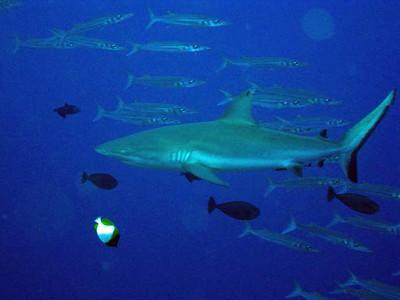 2009 Palau Kids Sea Camp