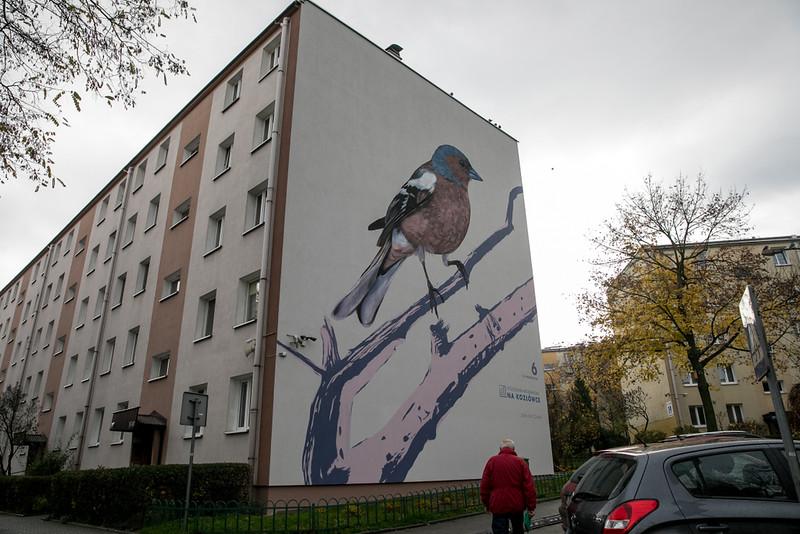 ptasie-murale-autor-wojciech-rokosz.jpeg