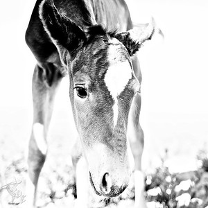 Fine Fine Equines