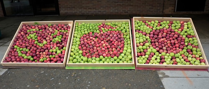 Ithaca Apple Harvest Festival 2013