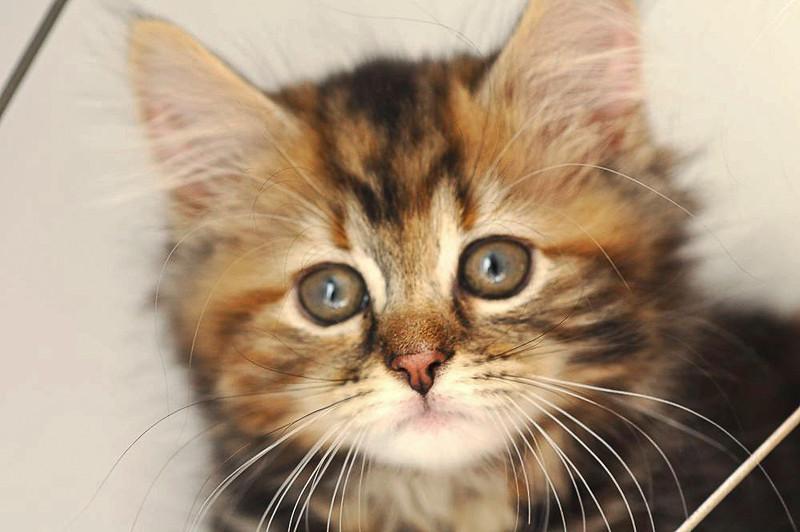 LW10_kittens_24.10.10_111.jpg
