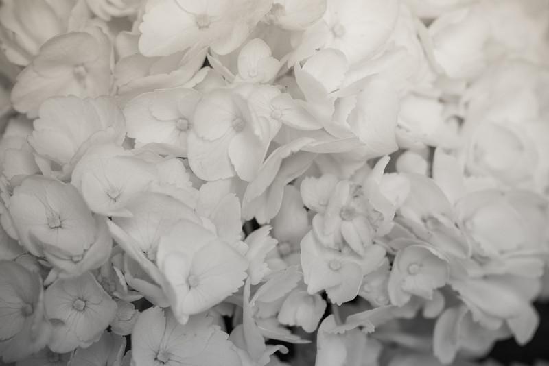 blackwhite-9306.jpg