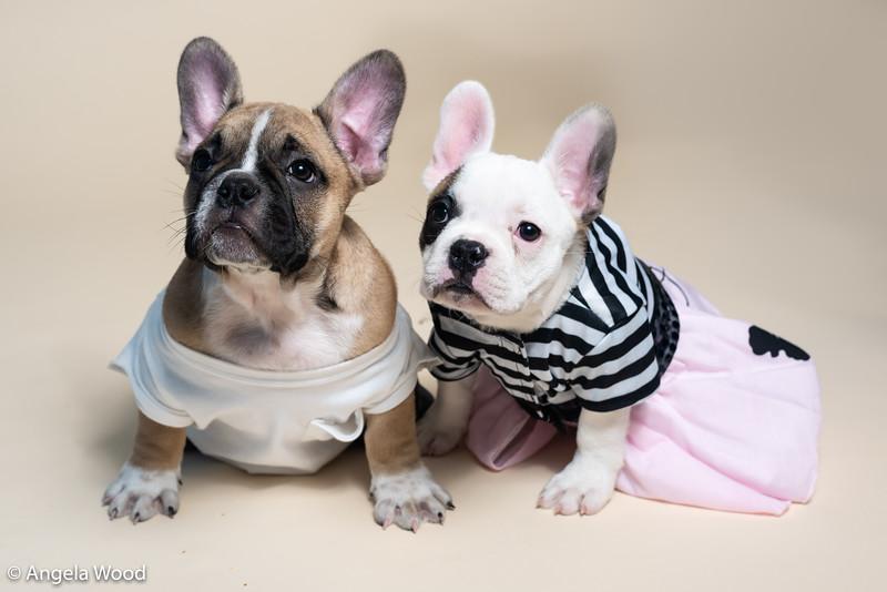 Puppies19.jpg