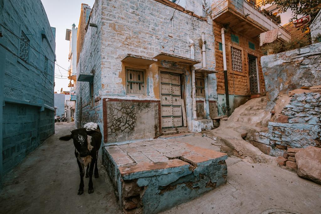 北印度介紹與旅行建議 by 旅行攝影師張威廉