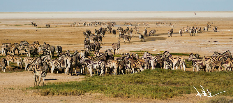 Etosha salt pan at the waterhole-1.jpg