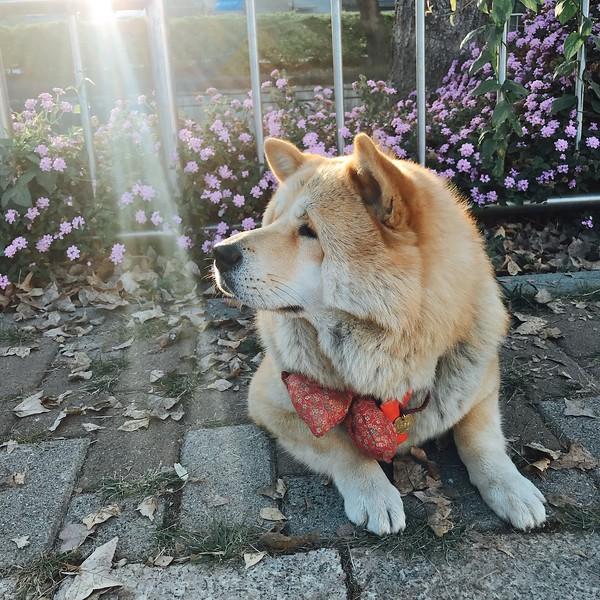 《寵物攝影》拍寵物超難?飼主必學 / 手機拍攝技巧大公開2021