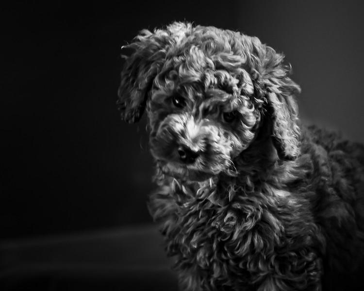Ollie-15.jpg