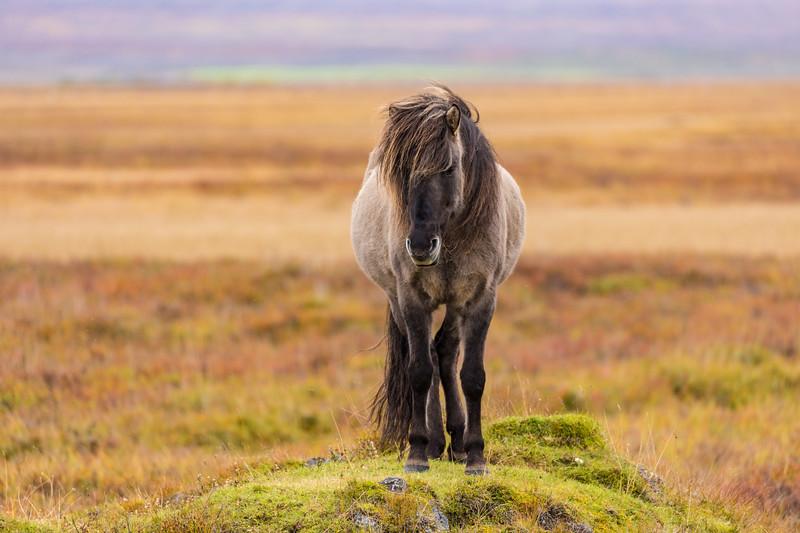 Iceland19_-3044.jpg
