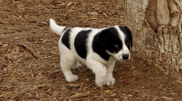 FRESH PUPPIES (update (08/12/08)