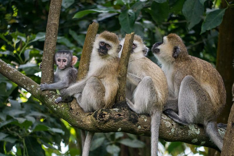 Nyugwe-Rwanda-64.jpg