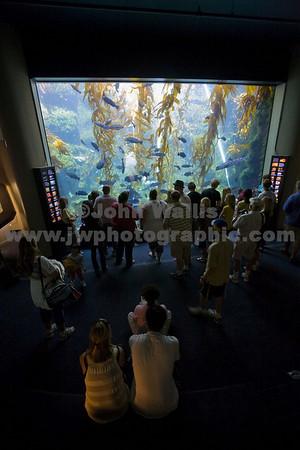 Scripps Aquarium