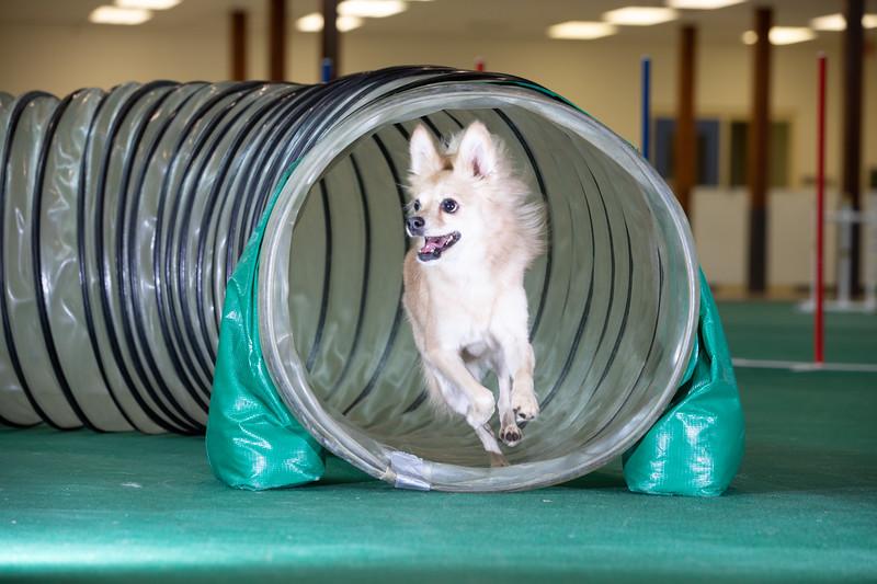 SPCA_Agility-69.jpg