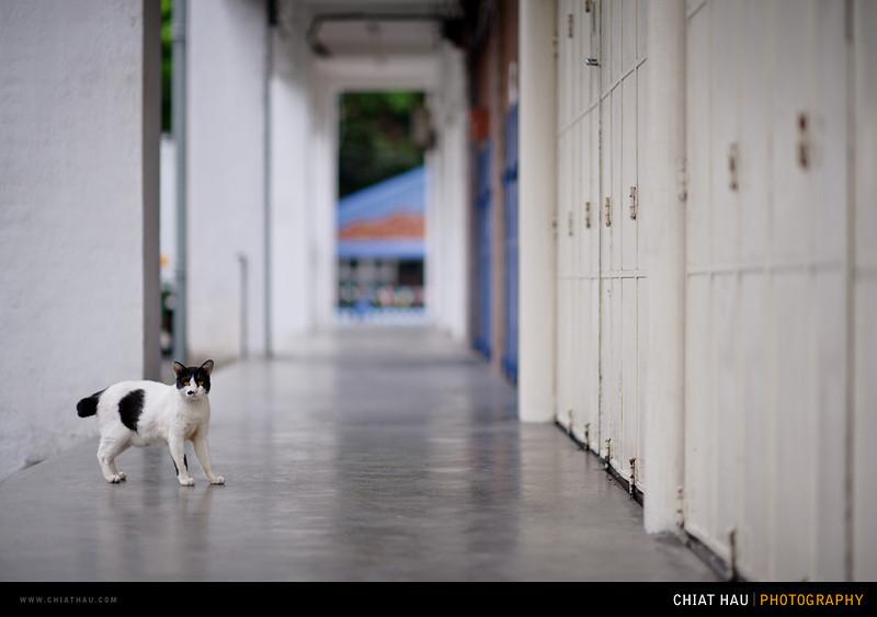 Chiat Hau Photography_Portrait_Kids_Bee Nee_Kai Xin-112.jpg