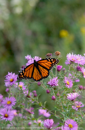 Bees, Butterflies, Insects & Bugs