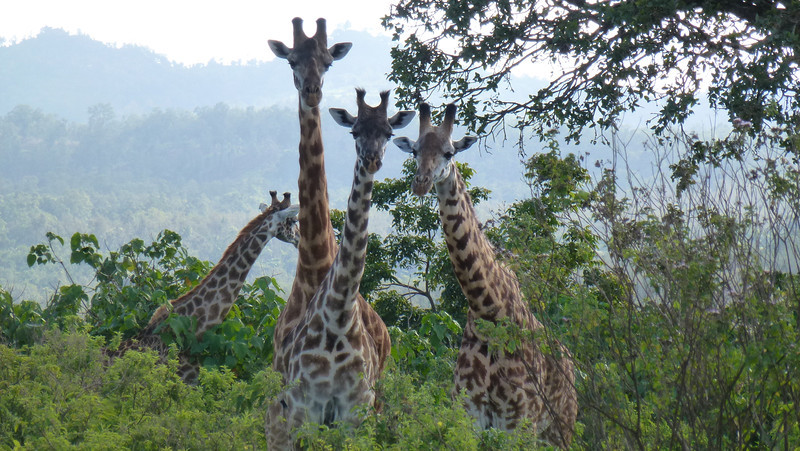 Arusha National Park, Africa (May 10,2012)