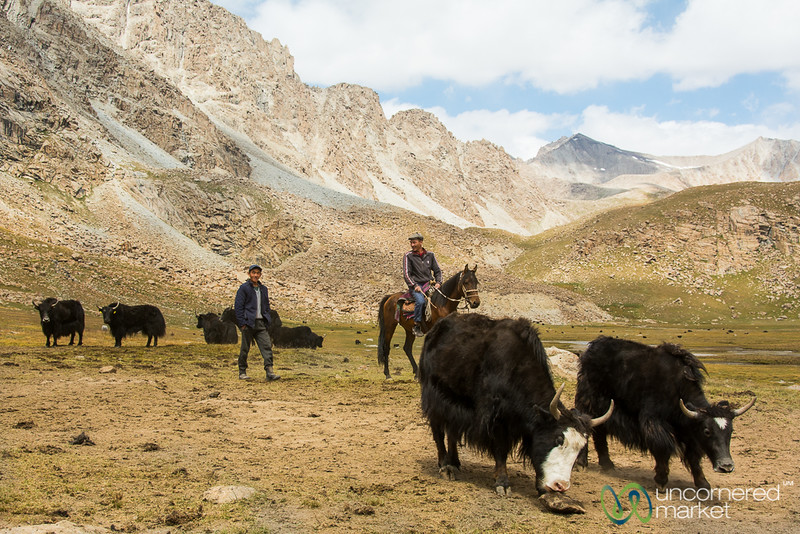 Yaks and Shepherds, Koshkol Lakes Trek - Alay Mountains, Kyrgyzstan