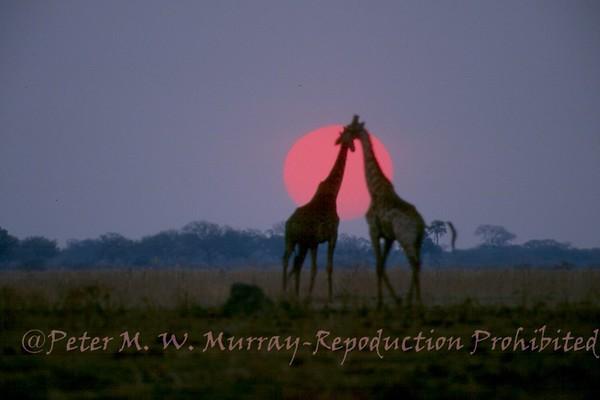 African Animals, scenics