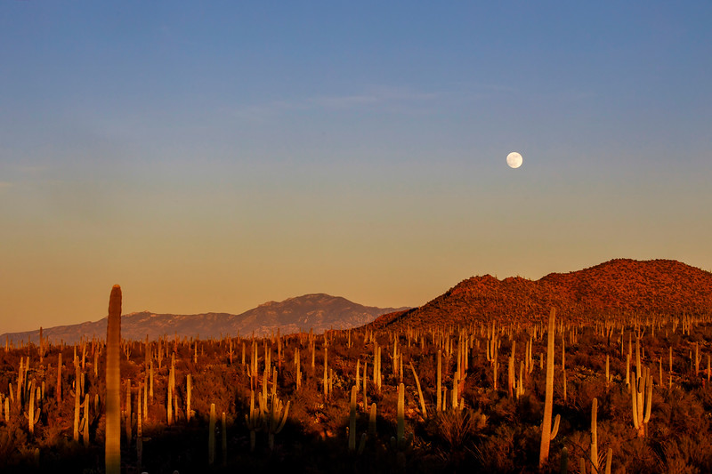 The Moon Meets Late Afternoon Sun