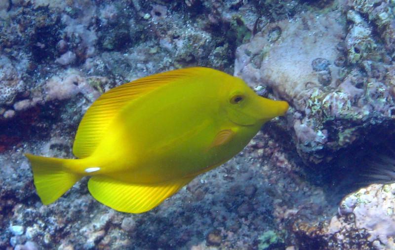 436- 20080416- Hawaii 20-Snorkelling IMG_0603.jpg