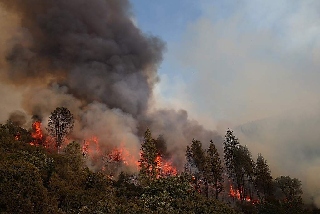 . GROVELAND, CA - AUGUST 21:  Fire consumes trees along US highway 120 as the Rim Fire burns out of control on August 21, 2013 in Groveland, California. The Rim Fire continues to burn out of control and threatens 2,500 homes outside of Yosemite National Park. Over 400 firefighters are battling the blaze that is only 5 percent contained.  (Photo by Justin Sullivan/Getty Images)
