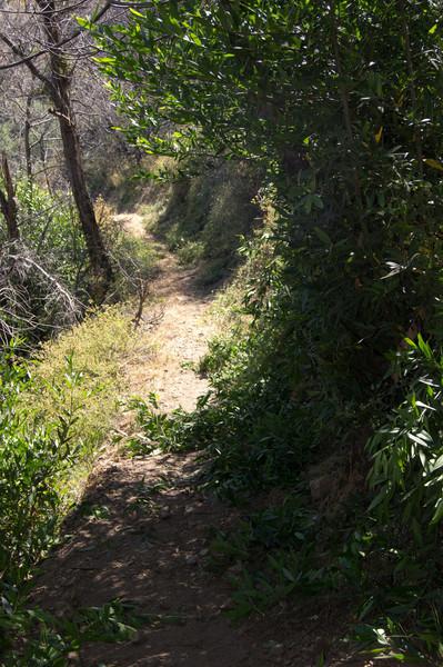 20120630013-Trailwork, MWBA, Sunset Ridge.jpg