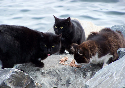 The Breakwater Cats