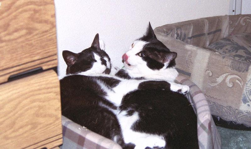 2003 12 - Cats 02.jpg