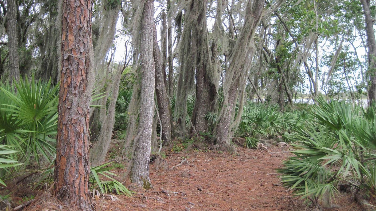 Trail through pines to South Lake