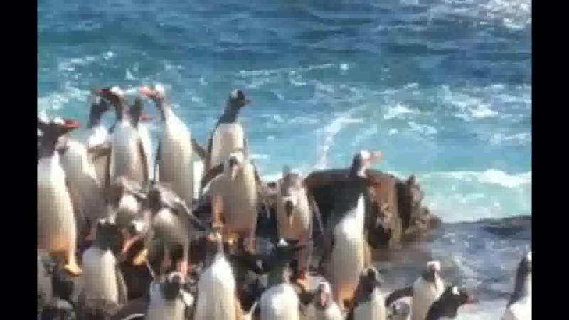 Penguin jump 2.mp4