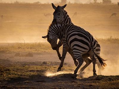 Zebra Play 2018