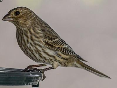 3-27-20 Misc Birds - Sharlene