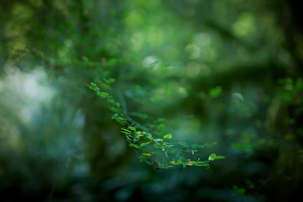 Forest Vignettes