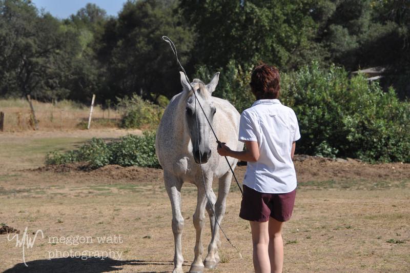 EB&Horses-077.jpg