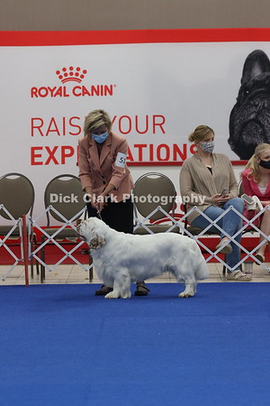 CSCA Regional Specialty Winners Dog