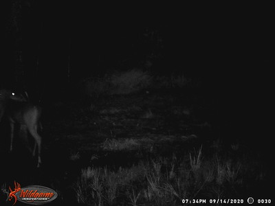 Backyard Game Camera
