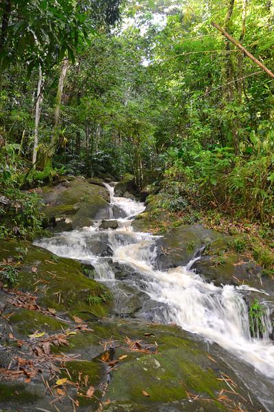 El Yunque Rain Forest/Puerto Rico  - Feb., 2013