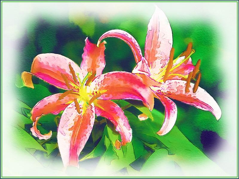 Watercolour Lilies.jpg