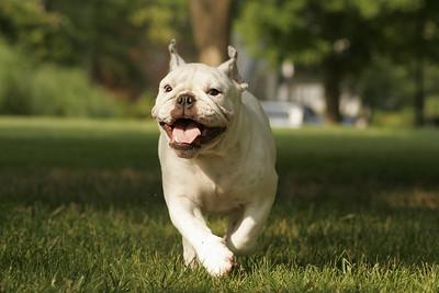 09BulldogDay