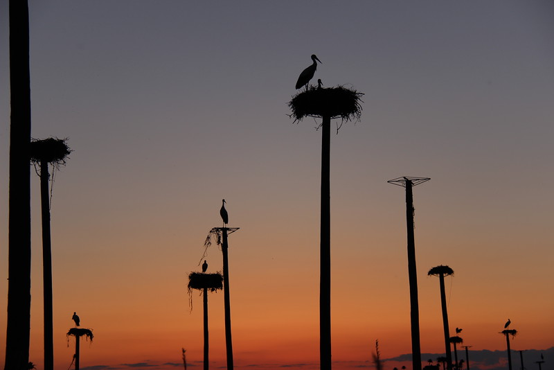 The sun sets as storks rest on nests atop tall poles overlooking the city of Caceres, Spain.