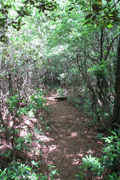 It was immediately apparent that, even by backcountry Linville Gorge standards, the section of the Bynum Bluff Trail between the LGT and the river doesn't see a whole lot of traffic...