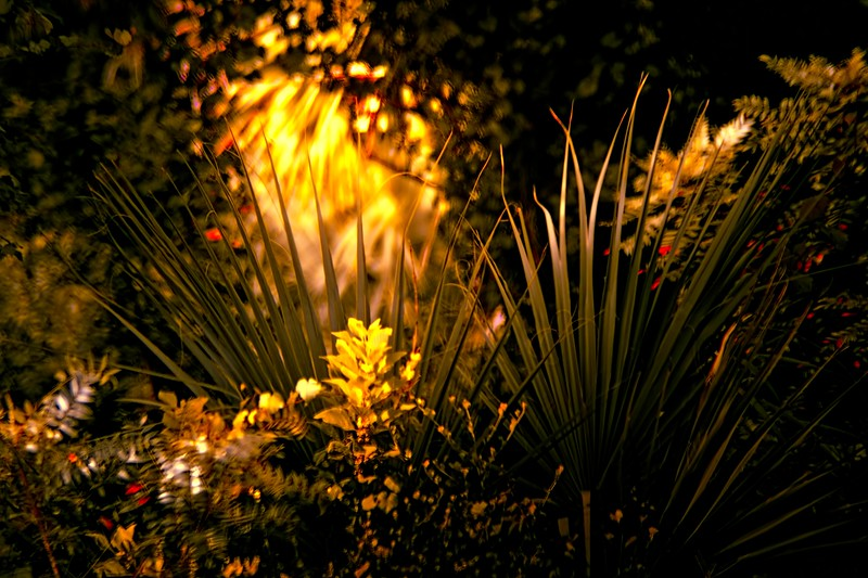 The Magic of Light-393.jpg