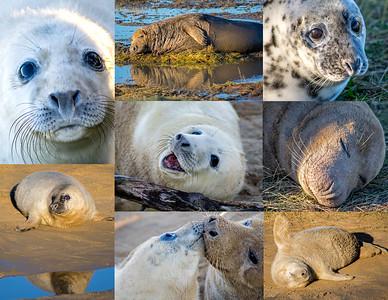 DONNA NOOK GREY SEALS (2)