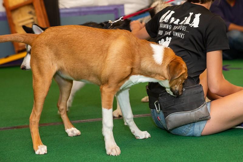 on Command dog Training June 2019-5178.jpg