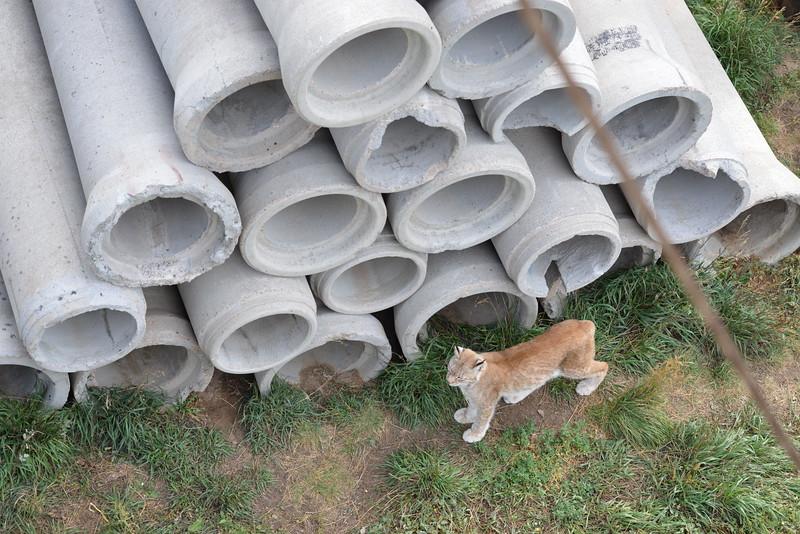 Bobcat playground